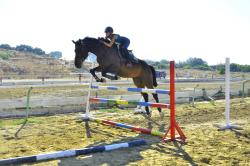 Curium Equestrian Centre
