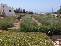 Áreas cultivadas: ervas aromáticas, azeitonas, etc.