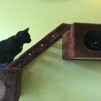 Tot Cat Cafe