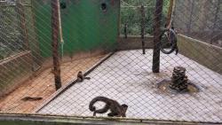 Zoológico Municipal de Cascavel - Danilo José Galafassi