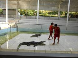 鳄鱼园和海洋馆