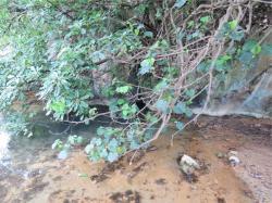 水が出ている場所