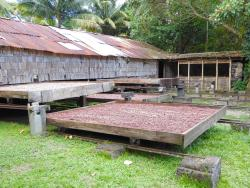 The cocoa drying
