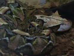 Reptile Garden