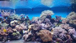 Sea Aquarium Oceanarium