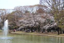สวนโยโยกิ