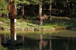 Wildpark an den Eichen