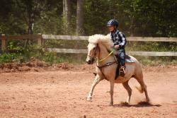 Forever Memories Equestrian Centre
