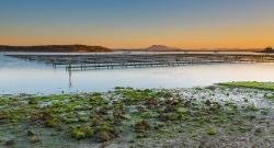 Coffin Bay Oyster Farm Tours