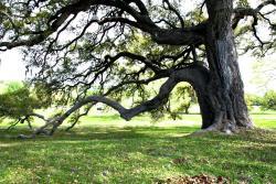 Old Baylor Park