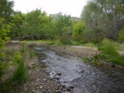Mimbres River Preserve
