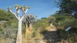 National Botanic Garden of Namibia