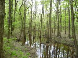 Congaree Creek Heritage Preserve