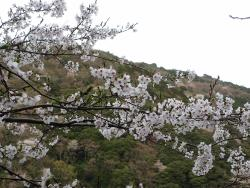 Yuzuruha Dam Park