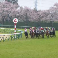 Nakayama Horse Tracks
