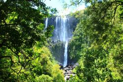 Wairere Falls Track