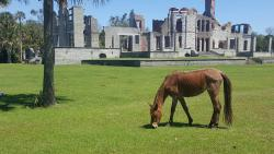 Cumberland Island National Seashore Museum