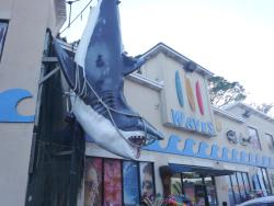 Waves Surf Shop