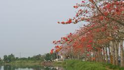 Baihe Linchupi Kapok Road