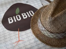 Gelateria Bio Bio