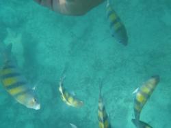 Punta Cana Daily