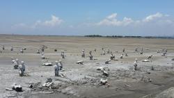 Lapindo Mudflow in Sidoarjo