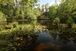 Pinecote Pavilion, as seen from across the pond. © 2014, Lana Gramlich