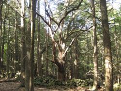 Quinebaug Woods