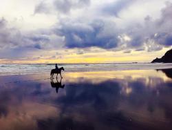 Wildcoast Ruapuke Horse Riding