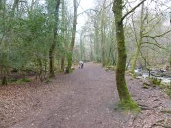 Long Timber Woods