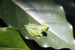 Ranario Monteverde Frog Pond
