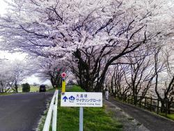 Oshimazutsumi Cycling Road