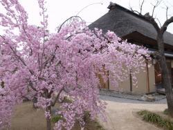 Former Higuchi Residence