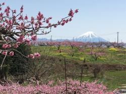 Misaka Togenkyo Park