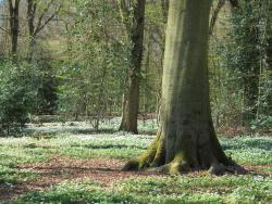 Haarlemmerhout