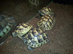 Expo Reptile Vii