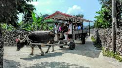 Water Buffalo Carriage Nitta Kanko