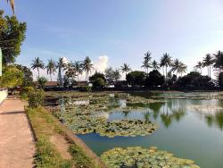 The Lotus Lagoon with Jogging track