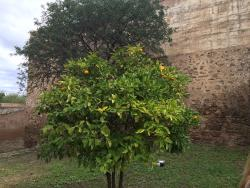 Jardines del Castillo de Gibralfaro