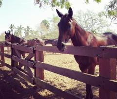 Equestrian Center at Sea Horse Ranch