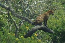 Srilanka-Explorer