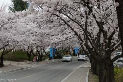 Yeungnam University Love Road