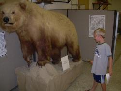 Werner Wildlife Museum