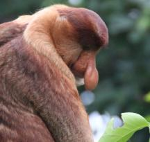 Wild Orangutan Tours - Day Tours