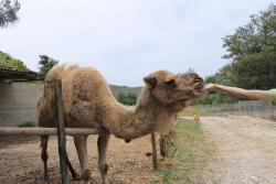 Apart from ostriches, you can see/interact with many other animals such as camel, kangaroos, dee