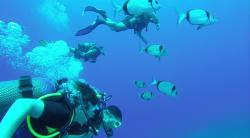 IntoTheBlue Diving Centre