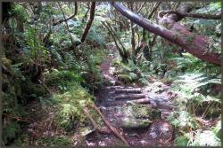 Mistérios do Sul do Pico Trail