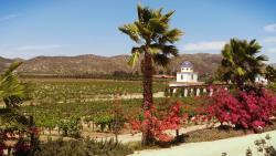 Wine Tours Baja