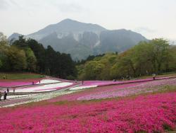 Shibazakura Matsuri