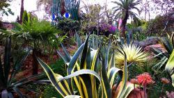 ANIMA Garden